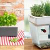 Herb garden hero