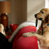 Gettyimages dogleash