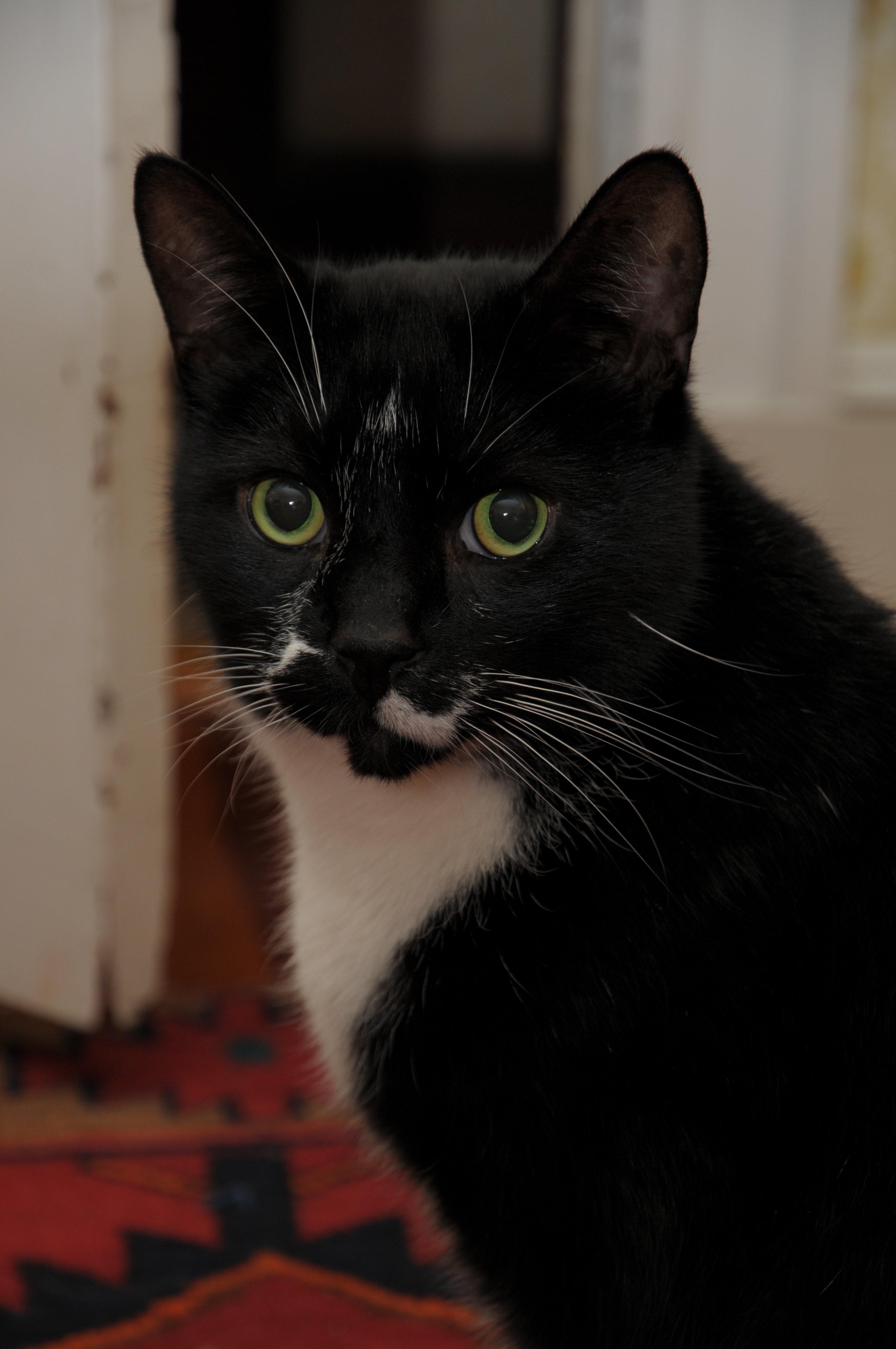 Feline Sample
