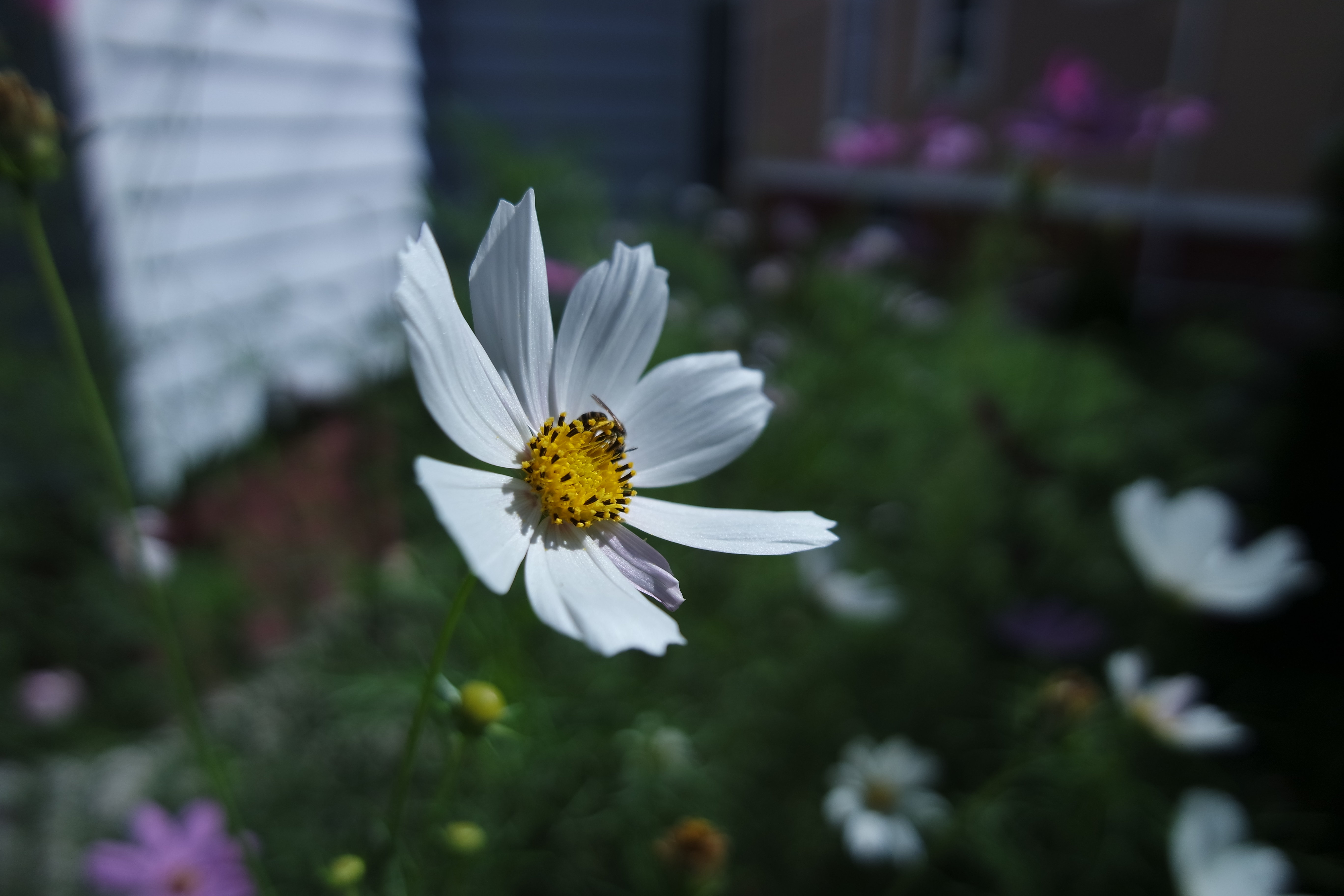 A sample photo of a flower shot by the Samsung NX3000.