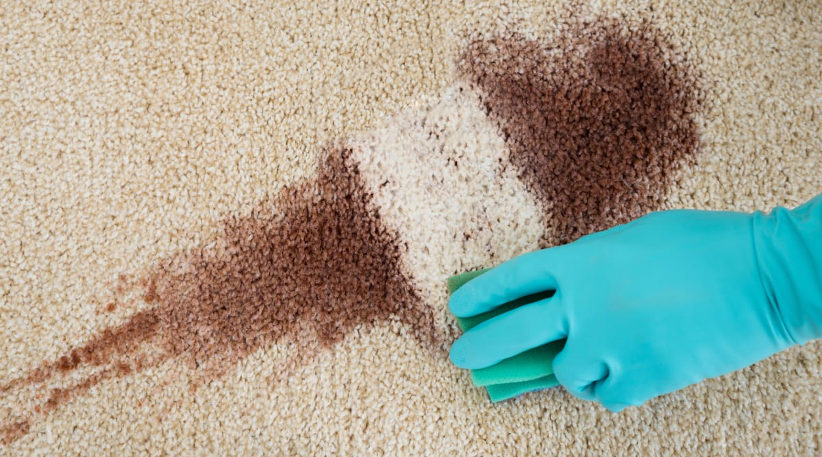 How To Clean The Worst Carpet Stains Reviewed Com Vacuums