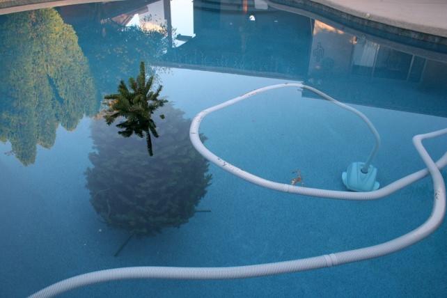 Christmas Tree Underwater