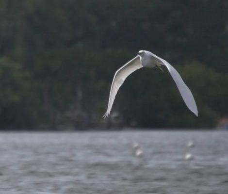 birdvacation.jpg
