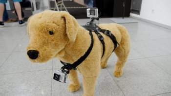 1242911077001 3796597355001 gopro dog harness fi
