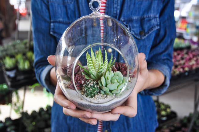 Succulent-Terrarium-9.jpg