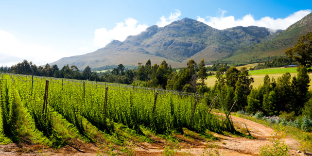 South African Hop Field