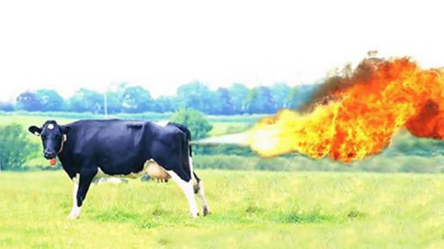 The Farting Cow