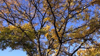 Canon_hg20_tree_web.jpg