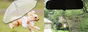 Rainy day hero