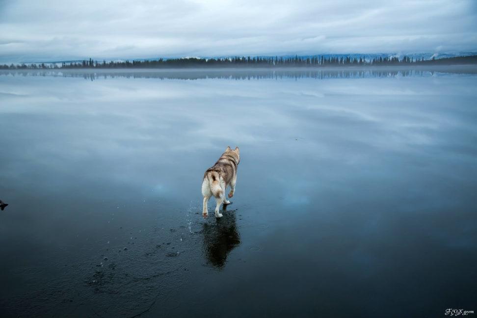 Huskies-Walking-On-Water-4.jpg