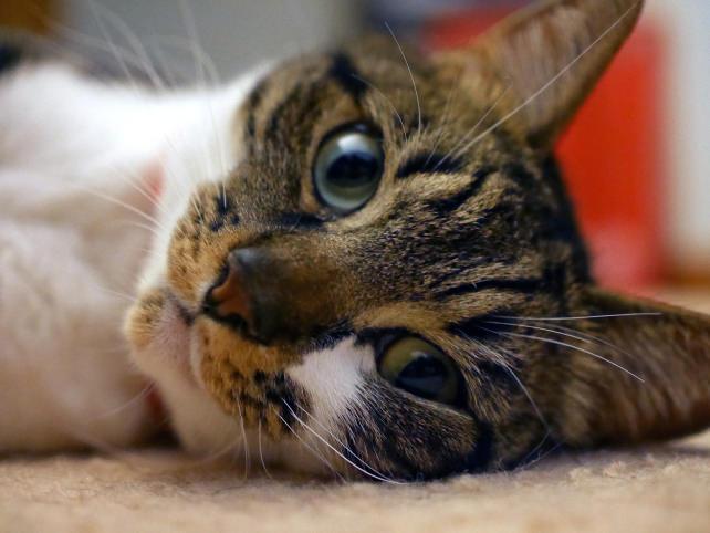 Cat Just Chillin