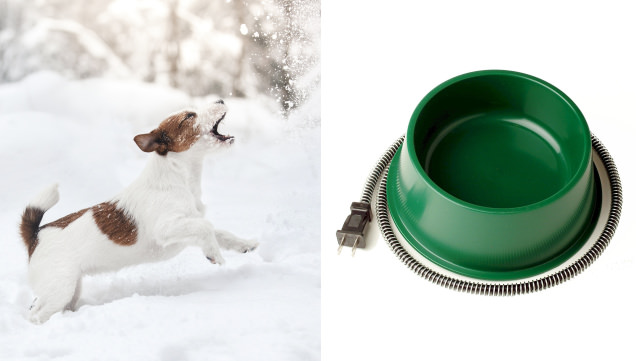 Farm Innovators Heated Water Bowl